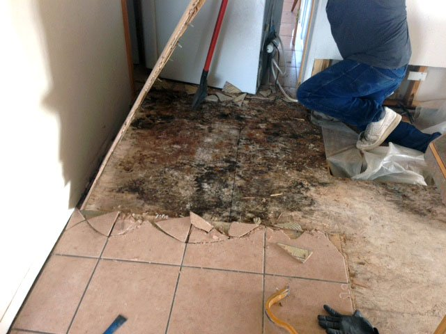 mold cleanup Walsenburg co